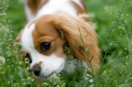 My Dog Ate My Plant: Top 6 Plants that Affect Your Dog's Health and How to Treat It