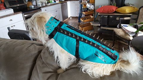 CoyoteVest fits like a glove