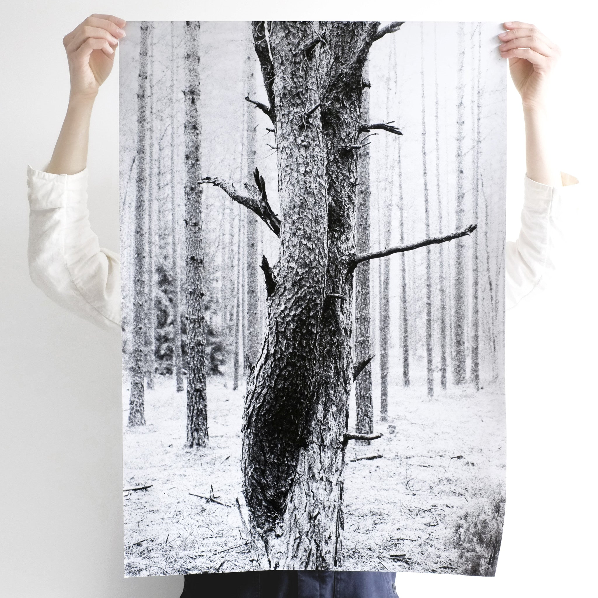 agatha a. nitecka silver artist shop loved up trees poster size L - A. - paper + salt - 2