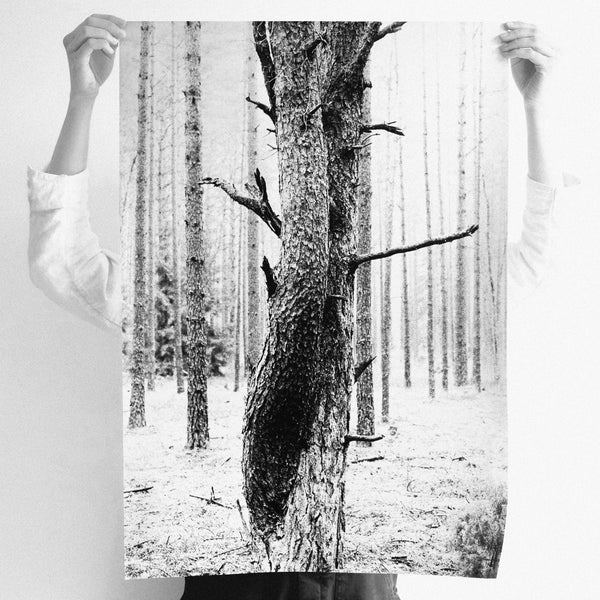 agatha a. nitecka silver artist shop loved up trees poster size L - A. - paper + salt - 1