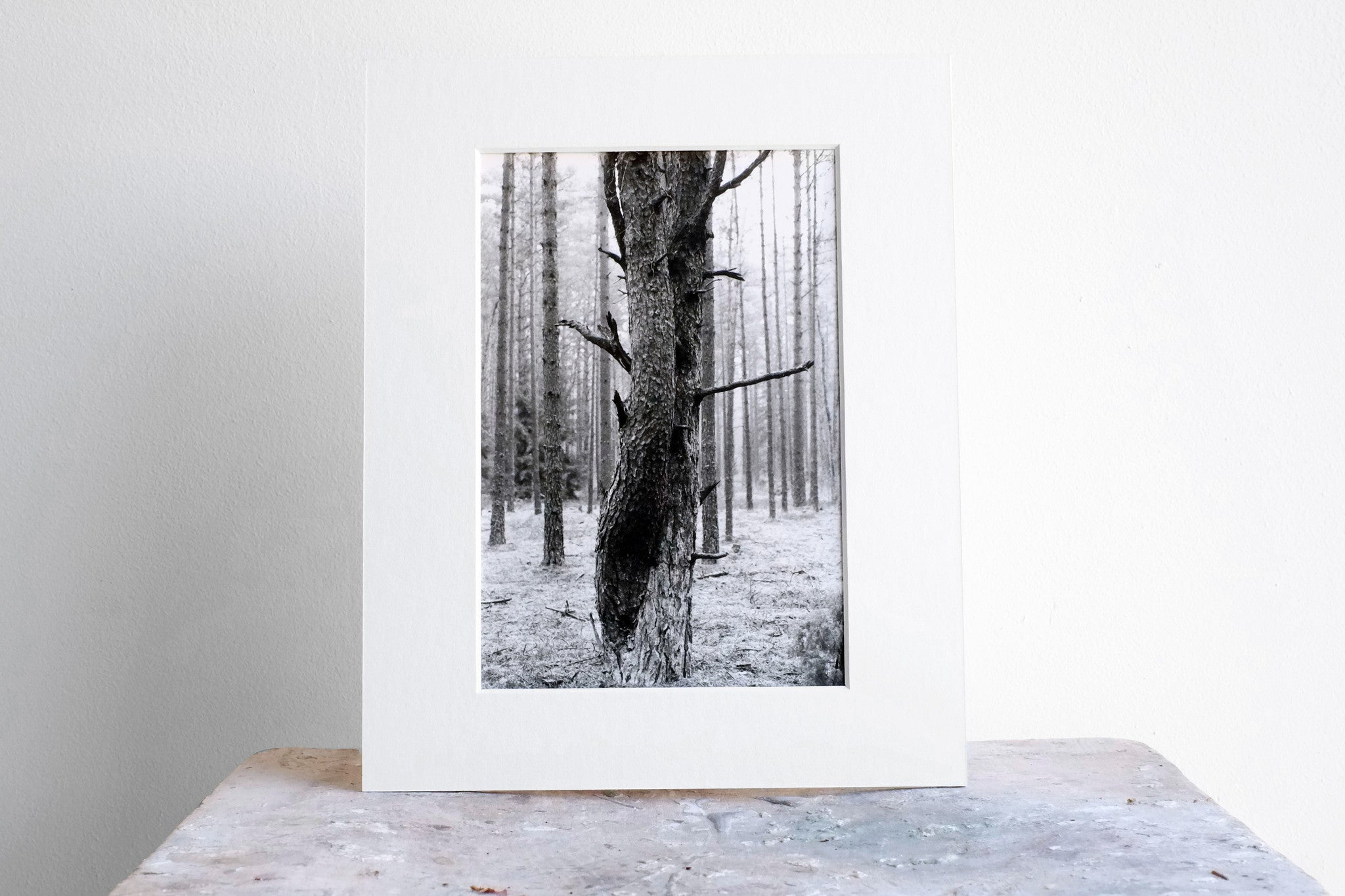 agatha a. nitecka silver artist shop loved up trees darkroom print size S - A. - paper + salt - 4