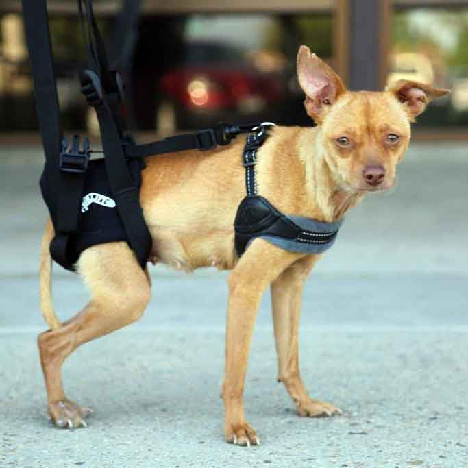 Airlift One Rear Support Dog Sling by Walkabout - Doolittle's Pet Products - 4