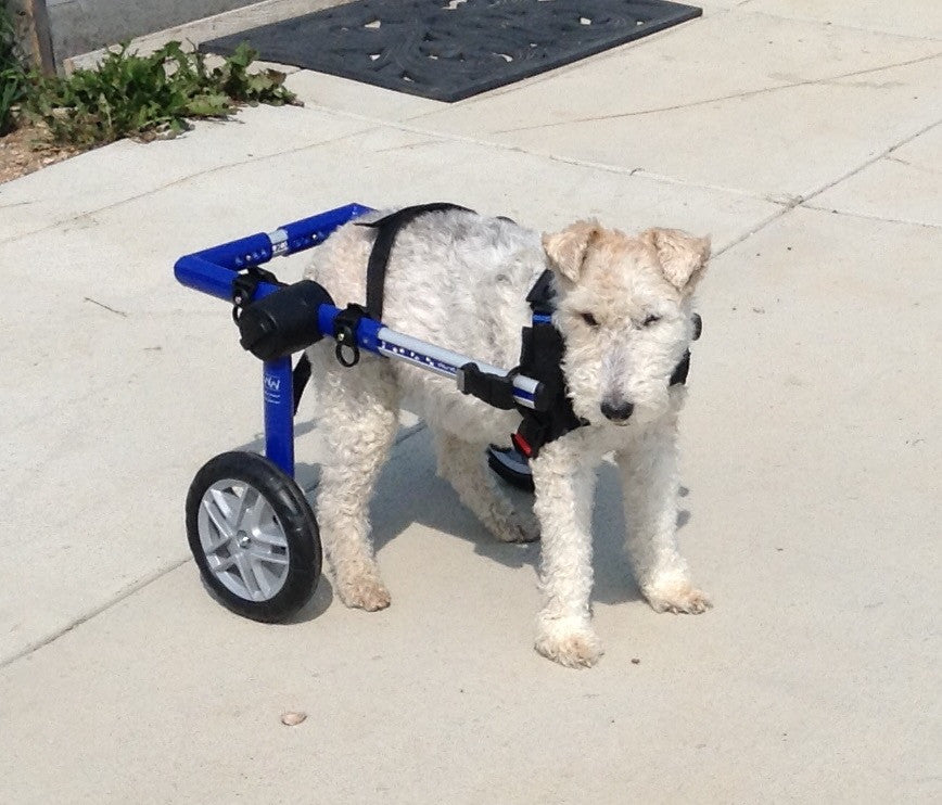 Dog Wheelchair by Walkin' Wheels - Doolittle's Pet Products - 2