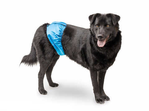 Male Wrap Belly Band for Dogs - Doolittle's Pet Products - 1
