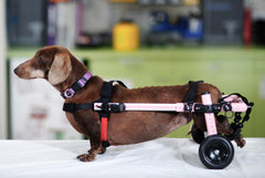 Dog Wheelchair by Walkin' Wheels - Doolittle's Pet Products - 1