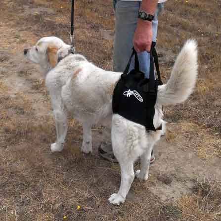 Airlift One Rear Support Dog Sling by Walkabout - Doolittle's Pet Products - 3