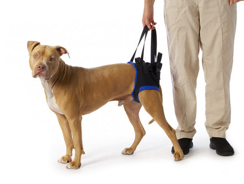 Rear Dog Sling Harness by Walkabout - Doolittle's Pet Products - 1