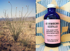Seasonal Flavor — Strawberry Ocotillo