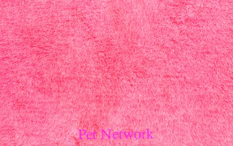 ** NO BACKING ** VET BED - PINK WITH WHITE FLECKS
