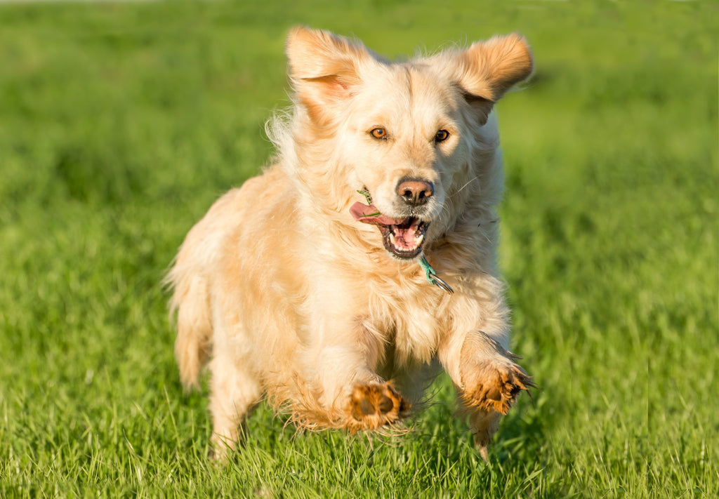 Hemp for Dogs: Our Compelling Reasons Why Your Dog Can Be