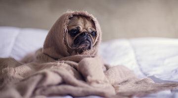 7 Simple Ways to Calm A Dog Scared Of Fireworks