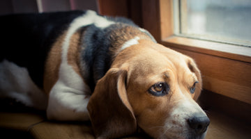 Signs You Need Help With Your Anxious Dog