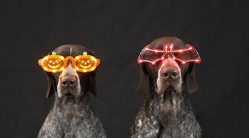 Taking Your Dog Out Trick-or-Treating on Halloween
