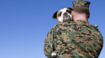 How therapy dogs support people who suffer from PTSD