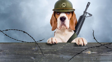 Famous War Dogs that Saved the Day and will Melt Your Heart