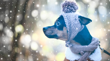 Take care of your Dog when it's cold with these tips