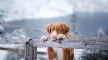 Is your dog feeling cold? Here's how to understand the signs