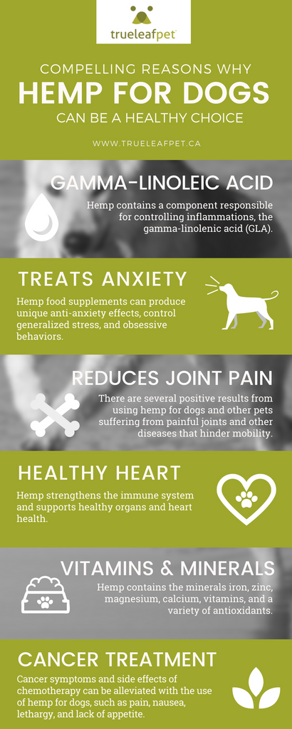 hemp for dogs infographic
