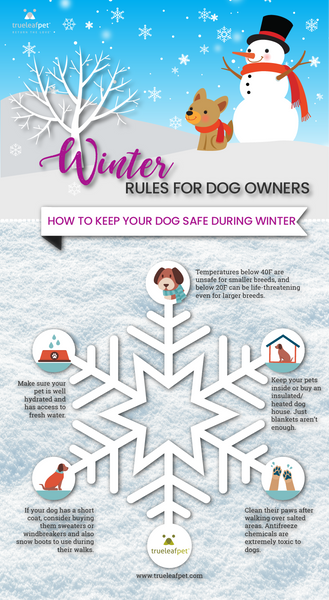 Dog infographic Winter
