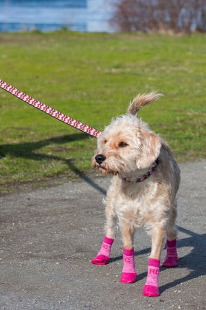Sport Pawks Waterproof Dog Socks on Dog Walking
