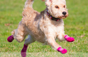 SALE! Sport Pawks - size SMALL - Anti-Slip Waterproof Dog Socks