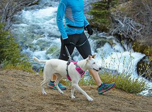 Front Range Harness (Ruffwear)  - Secure & Comfortable Dog Harness
