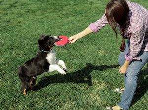 CLEARANCE! Hover Craft - Floating Dog Frisbee