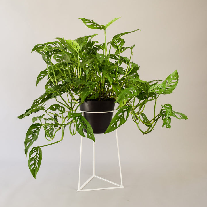 "Skaha 18"" Floor Planter - Plant Stands - By Plantwares™"