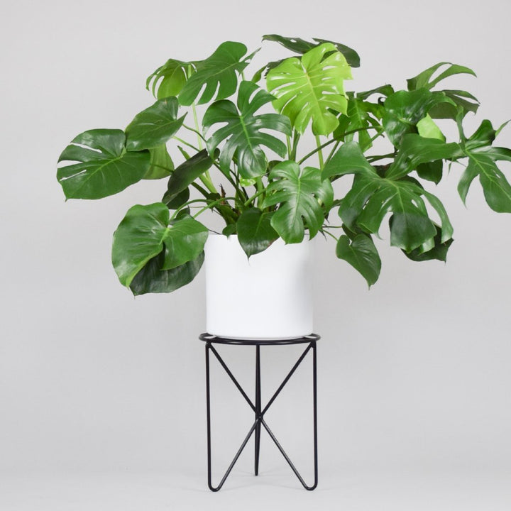 Tofino - Plant Stands - By plantwares™