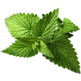 Mint Leaves Packet (Texas)