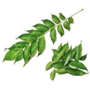 Curry Leaves (Texas)
