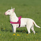 No Pull Dog Harness - Your Lifestyle Corner