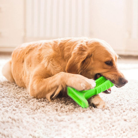 Image of Pet Dogs Rubber Chew Toys - Your Lifestyle Corner
