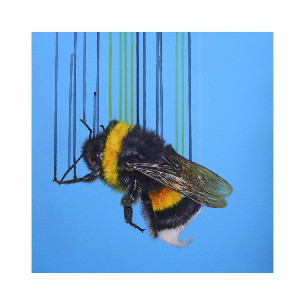 BOMBUS TERRESTRIS BY LOUISE MCNAUGHT