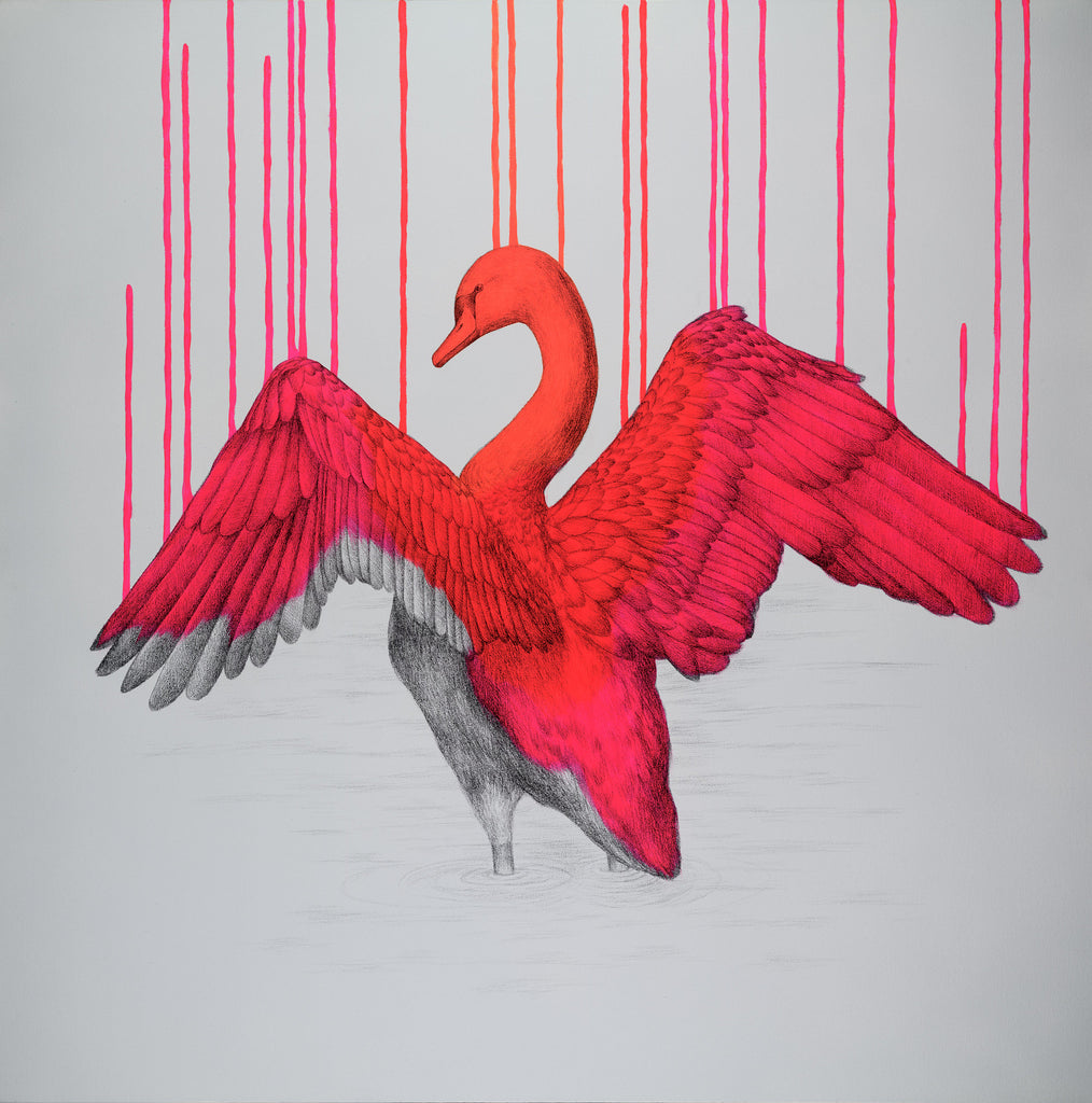 'Beautifully Wild' by Louise McNaught