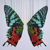 """Hidden Rainbows"" By Louise McNaught"