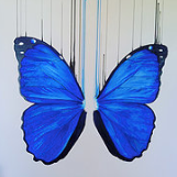 """Morpho"" By Louise McNaught"