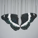"""What Remains of Psychae "" By Louise McNaught"