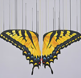 """Kissed by the Sun "" By Louise McNaught"