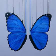 """Morpho"" Louise McNaught"