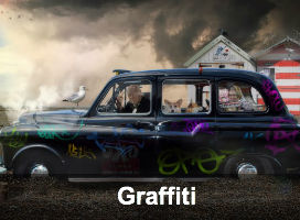 Graffiti Limited Edition Prints