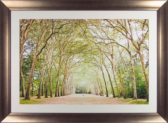 Charlotte Clements' Path in Paris ' - Framed Open Edition Print