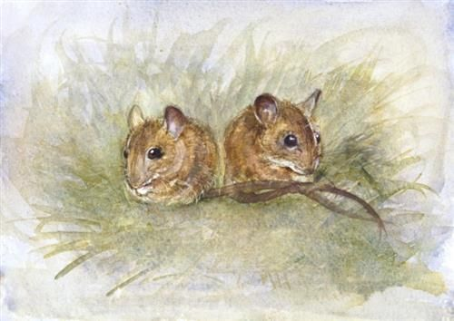 Kate Wyatt - 'Wood Mouse Pals' - Limited Edition Art