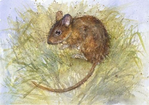Kate Wyatt - 'Wood Mouse Hideaway' - Limited Edition Art