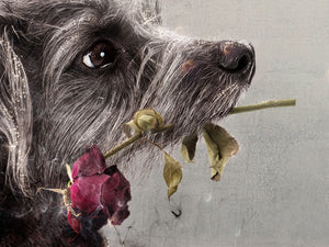 Mark Davies - 'I'd Give My Last Meatball' (Lady & The Tramp) - Limited Edition