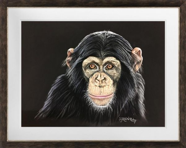Samantha Greenhill - 'Chimp' - Original Art