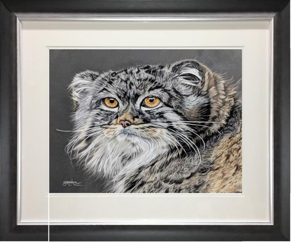 Samantha Greenhill - 'Pallas Cat' - Original Art