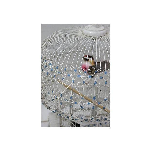 White Bird Cage-Medium