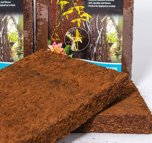 Tree Fern Board: Medium - twin pack