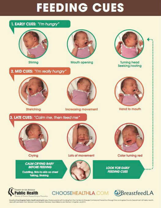 Learning Newborn Cues